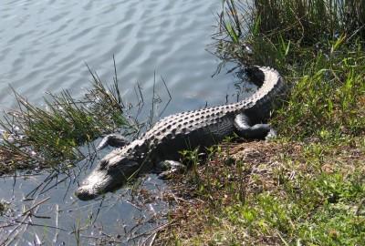 EVERGLADES National Park, Florida (USA)