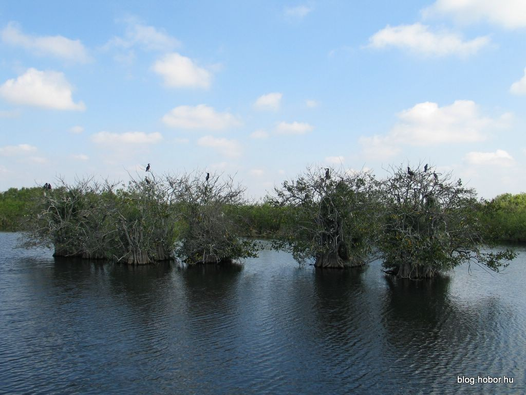 EVERGLADES National Park, Florida (USA)