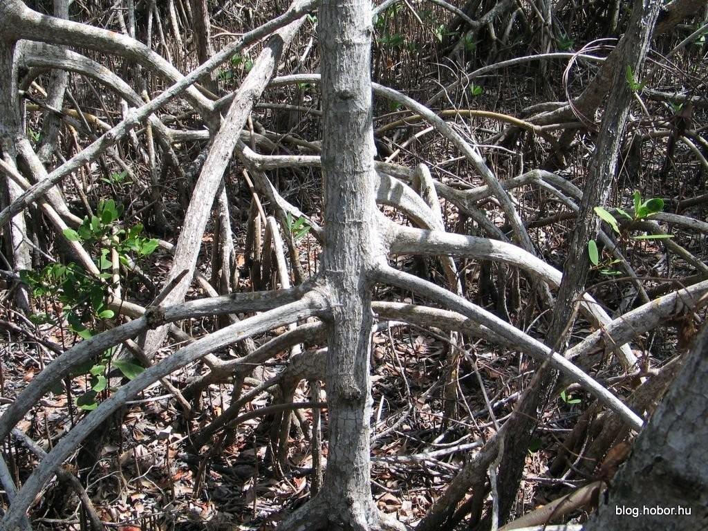 EVERGLADES National Park, Florida, (USA)