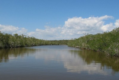EVERGLADES National Park, Florida, (USA)